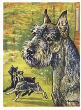 1952 Rare Dog Art Print Austria Tobacco Company Bildwerk Standard Schnauzer