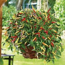 New listing Pepper Chilli - Volante Hot Red - 8 Seeds