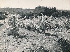ARDÈCHE c.1940 - 6 Photos Vignes Château Rivière  Salavas  - L 119