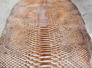 Genuine Curtus Python Leather Hide Snake Skin Pelt Bronze and White Curtus