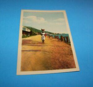 """Haiti Vintage Postcard  """"Road To Milot, Entrance Of Cap-Haitien"""""""