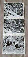 Walt Disney Jungle Cat movie lot of 3 press kit 8x10 B&W photos
