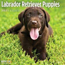 2021 Labrador Retriever Puppies 12 x 12 Wall Calendar Cute Dog