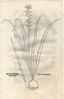FUCHS  1543 Antique Woodcut Print - HYACINTH Floral Botanical Herbal *VERY RARE*