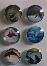 Dolphins Glass Gem Magnets