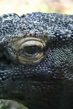 Komodo Dragon : Notebook 150 Lined Pages by Wild Pages Wild Pages Press...