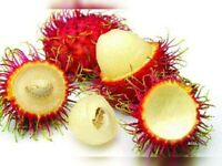 Fresh rambutan fruit ( 5 Lbs )