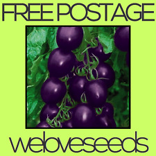 LOCAL AUSSIE STOCK - Purple Cherry Tomato, Vegetable Seeds ~10x FREE SHIPPING