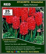 Flower  Seeds - HYACINTH Orientalist  RED* 25x SEEDS
