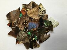 Butterfly wings 50 mix SCRAP (NOT KILLED) in a little plastic box------