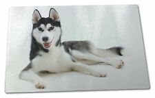 Siberian Husky Dog Extra Large Toughened Glass Cutting, Chopping Boa, AD-H55GCBL