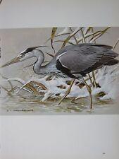 Basil Ede Vogel Aufdruck ~ Heron