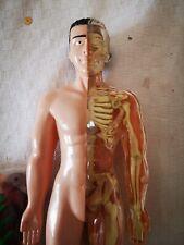 Corpo umano modello