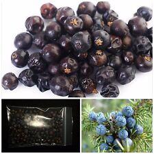 Juniper Berry 100% Natural Dried Juniper Berries - Ideal for cooking etc.