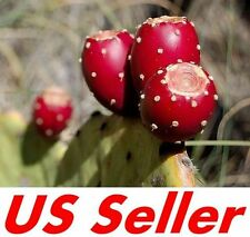Sweet Red Prickly Pear Cactus Seeds G76, 10 Seeds, Indian Fig Seeds