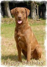 Chesapeake Bay Retriever Dog Design A6 Textured Birthday Card BDCHESAPEAKE-2
