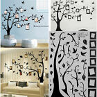 Family Tree Birds Photo Frame Quotes Wall Stickers Art Decals Home Decor