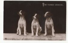 The Three Graces Dogs Vintage RPPC Postcard EA Schwerdtfeger US082