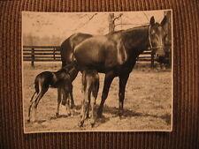 "Standardbred Novelle Hanover & Twin Foals ""Tweedledum & Tweedledee"" Horse Photo"