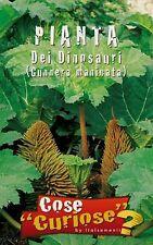 GUNNERA MANICATA Plant of dinosaurs giant-rhubarb pack/pack 10-15 seeds seeds
