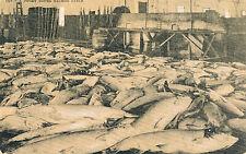 1912 Puget Sound Salmon Catch Sepia Photo Postcard, Warehouse