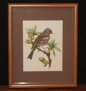 "Chaffinch Bird Print by John Murr 1958 Faux Wood Frame w/ Glass & Matting 9""x11"""