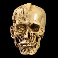 7cm Resin Replica 1:1 Life Size Human Anatomy Skull Realistic Halloween Deco