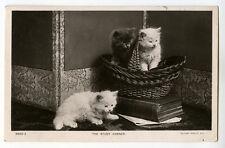 c 1907 British THE STUDY CORNER Cute Little Fluffy Cat Kittens photo postcard