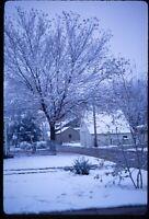Frozen Tree Iowa Winter Day Suburbs Snowy 1967 60s Vintage 35mm Kodachrome Slide