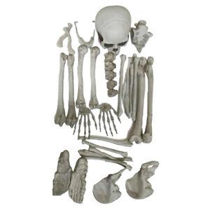 Aquarium   Tank Ornament Resin Skeleton Skull DIY Skull Accessory