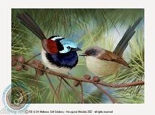 © ART Variegated Fairy Wren Australian Wildlife Bird Original Artist Print by Di