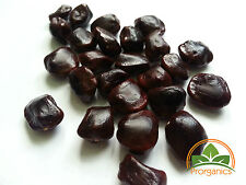 10 Rare Sweet Organic Tamarind Seeds from Puerto Rico by Prorganics