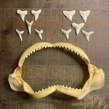 Group 5 - Jaws and Teeth! Whitecheek Blacktip Tiny Shark Bull Mako Decor Display
