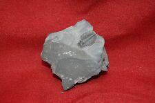 Elrathia kingi, Cambrian Age trilobite