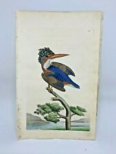 Crested Kingfisher - 1783 RARE SHAW & NODDER Hand Colored Copper Engraving