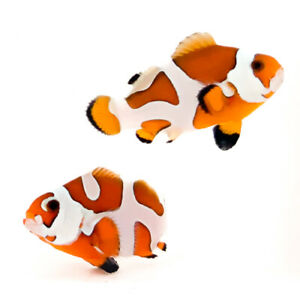 Sustainable Aquatics Orange Storm Designer Clownfish Bonded Pair WYSIWYG