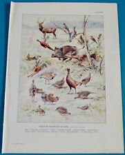 Ancienne Impression Gibier Chasse Pigeon Sanglier Cerf Lièvre Perdrix Outarde