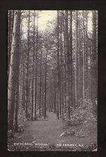 1916 Cathedral Woods Postcard--North Conway, New Hampshire