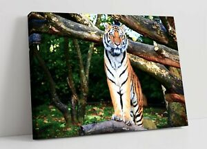 TIGER 5 LARGE CANVAS WALL ART FLOAT EFFECT/FRAME/PICTURE/POSTER PRINT- ORANGE
