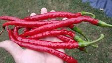 Joe's Long Cayenne Chili 10+ Samen - Saatgut - Seeds - LANG und FEIN!