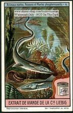 Weird Glowing Sea Fish And Animals 1920s Trade Ad Card
