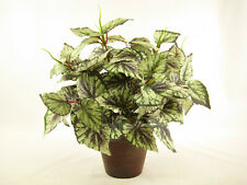 Potted Begonia Rex Cultorum Artificial Plant ~ Potted House Plant Conservatory