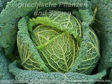 WIRSING Col 100 Semillas Verdura de invierno rica en vitaminas vieja tradicional