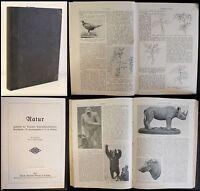 Thesig - Natur- Zeitschrift der Dt. Naturwissenschaftlichen Gesellschaft 1912 xz