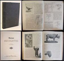 Thesig - Nature Magazine de Allemand Sciences naturelles Société 1912 xz