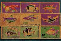 AQUARIUM FISH SPECIES  Set of 16 Russian MATCHBOX LABELS