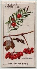 Yew And Guelder Rose Seeds Spread By Birds 90+ Y/O Trade Ad Card