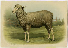 Antique Print-SHEEP-Anonymous-1880