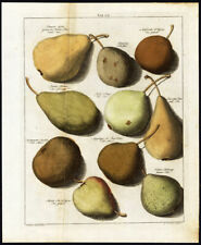 Antique Print-PEARS-Tab.VII-Pomologia-Knoop-1758