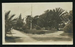 Sharp CA Long Beach RPPC 1915 CITY PACIFIC PARK? Fan Palm Trees by Asais Photo